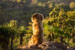 Las ventajas de viajar con animales
