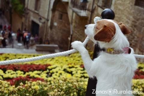 Practicar turismo rural con mascotas, ¿qué tener en cuenta?