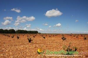 Turismo del vino por Cuenca y Albacete