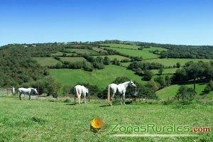 España Verde, mucho que ver en un país rural